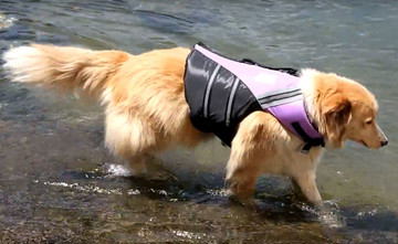 Dog Life Jackets Water Woofer
