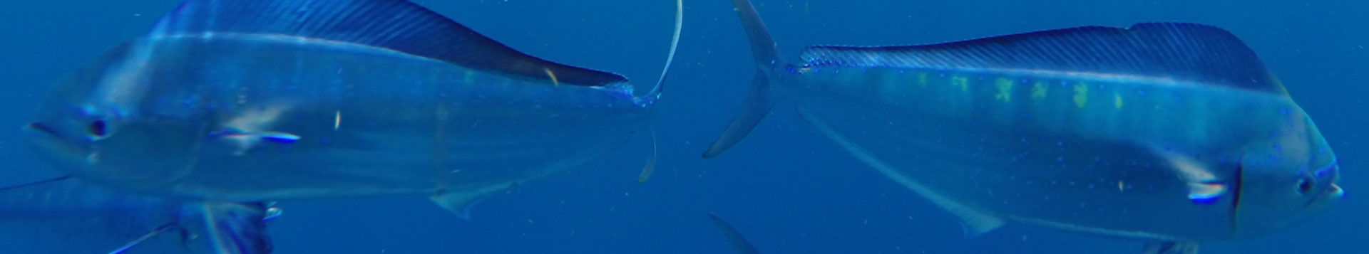 Daiwa Saltwater Reels Shoregame Offshore