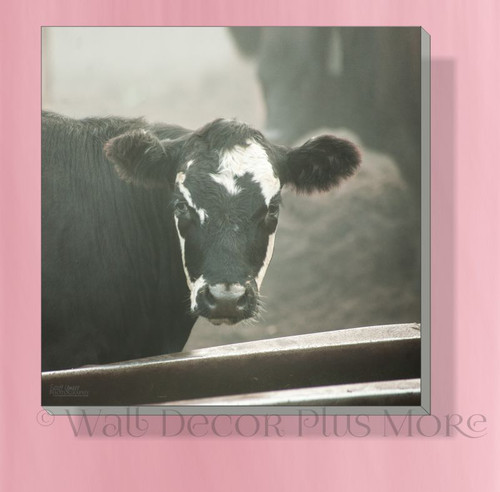 Cow Face 12x12 Canvas Print Hanging Wall Art Decor for Farmhouse