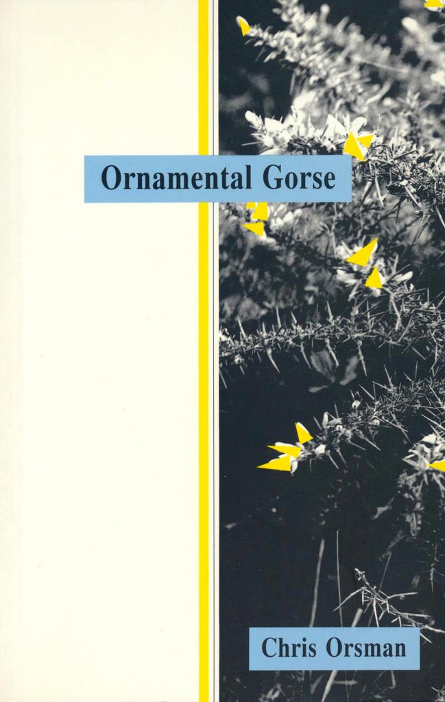Ornamental Gorse