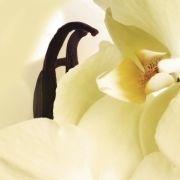 Sweet Vanilla eliquid