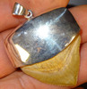 Squalicorax shark tooth pendant