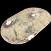 Small Ammonite platter