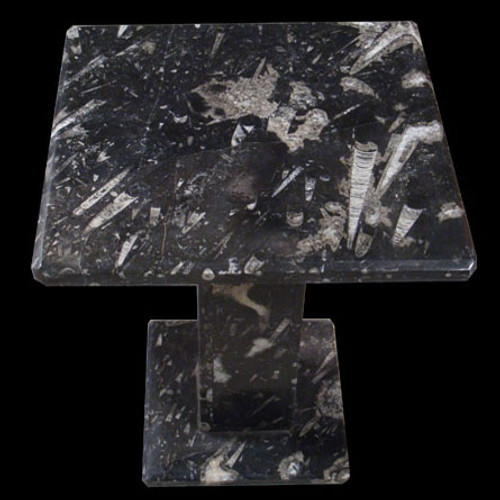 Square Orthoceras fossil end table from Morocco.