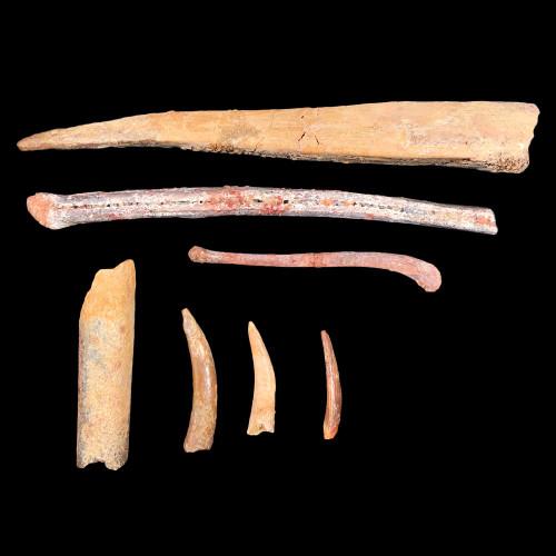 Pteranodon bones