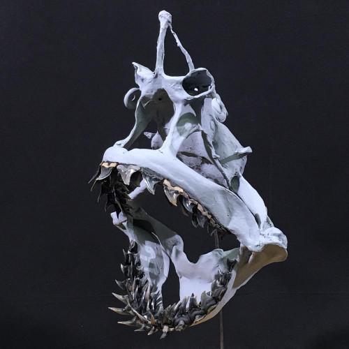 Hemipristis shark  jaw