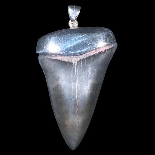 Mako fossil shark tooth pendant