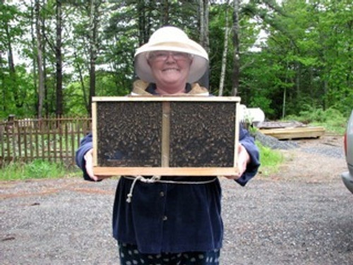 3-pound package bees for pickup