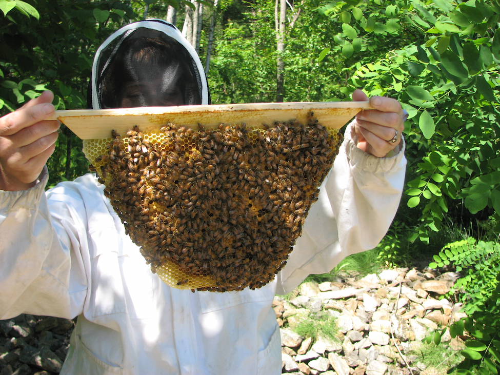 What did bees do before beekeepers?