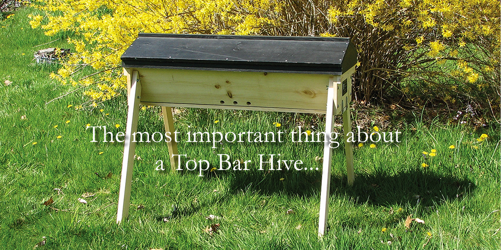 The most important thing about a top bar hive
