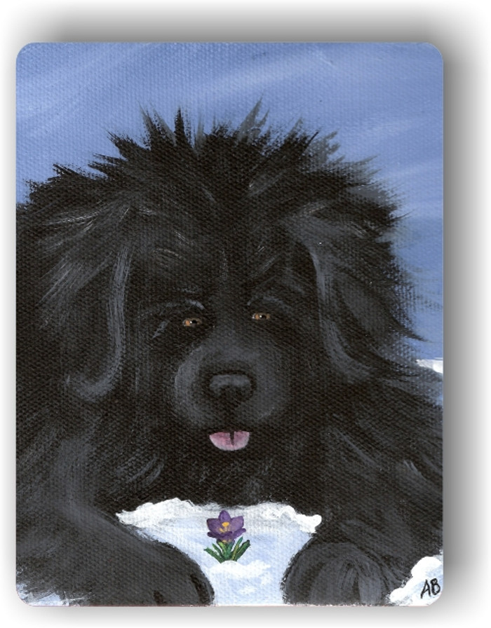 MAGNET · SPRING IS IN THE AIR · BLACK  NEWFOUNDLAND · AMY BOLIN