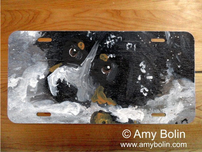 LICENSE PLATE · MY FIRST WINTER · BERNESE MOUNTAIN DOG · AMY BOLIN