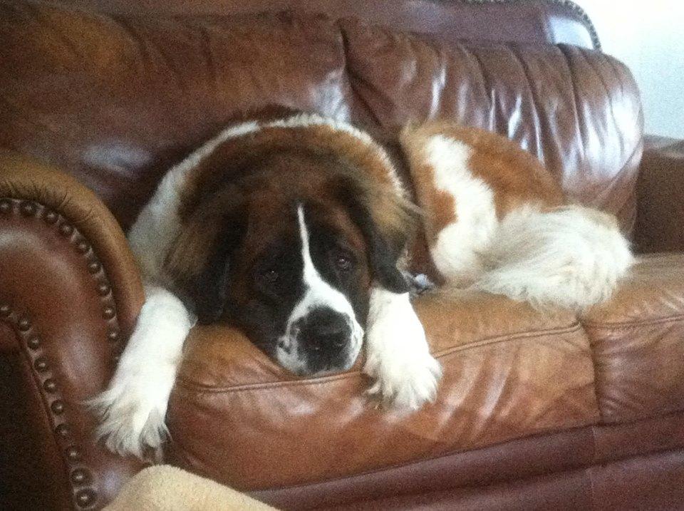 sadie-on-couch.jpg