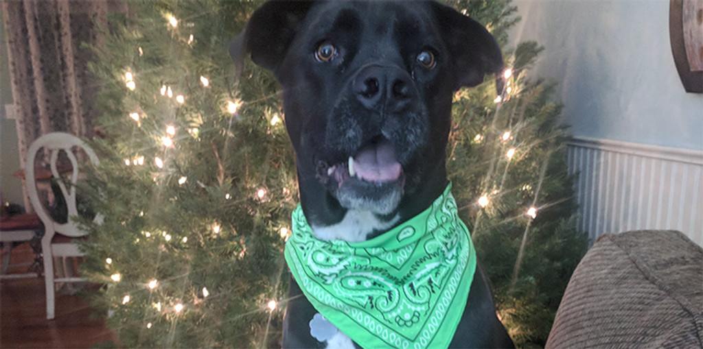 Bright Colored Wunder Dog Bandana Helps Save Dog