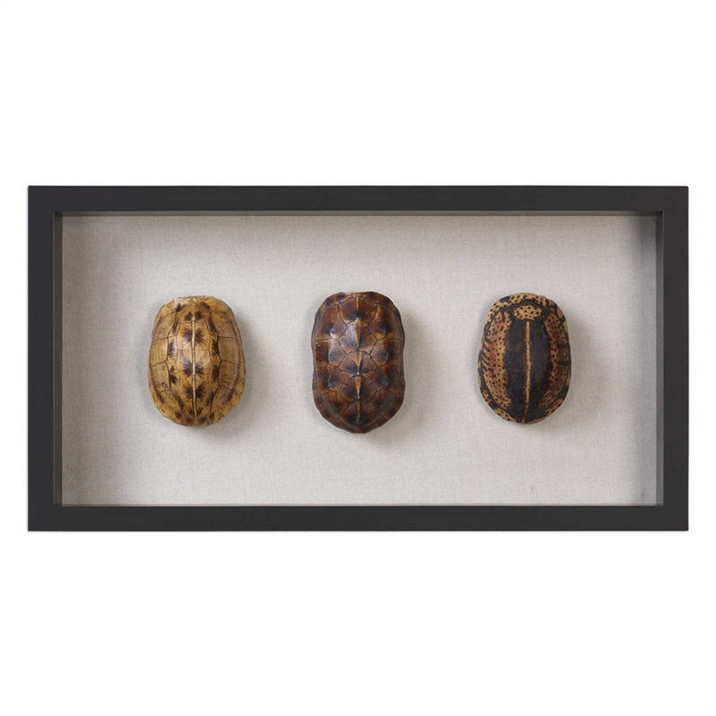 Tortoise Shells Shadow Box Wall Decor