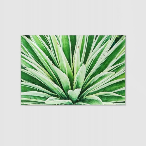 Canvas Print: Green Cactus