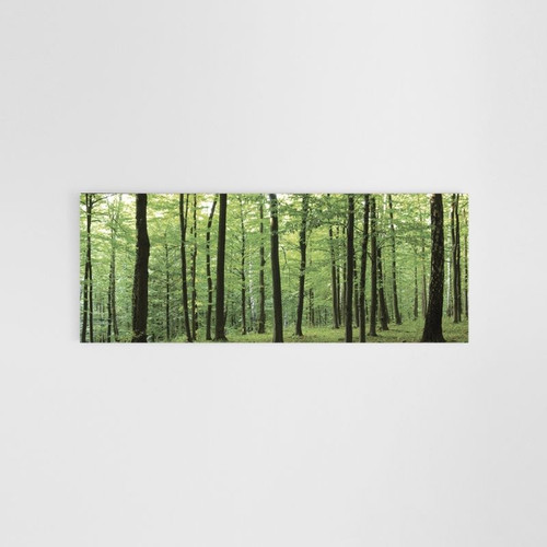 Canvas Print: Green Forest