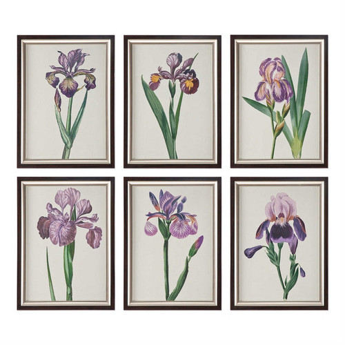 Iris Beauties Set/6 - Framed Artwork