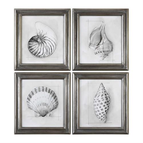 Shell Schematic Set/4 - Framed Artwork