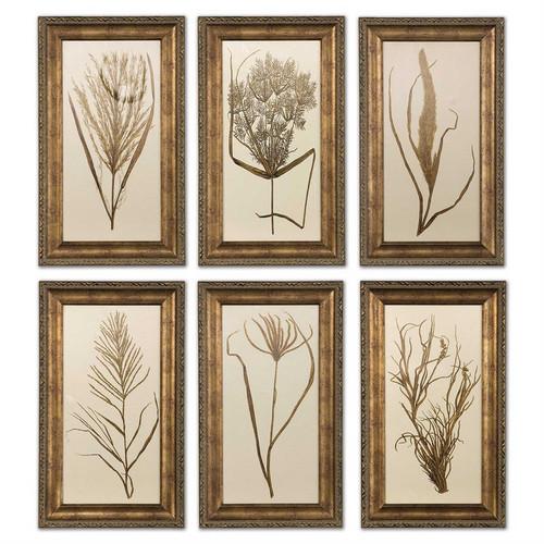 Wheat Grass - Set/6 - Framed Artwork