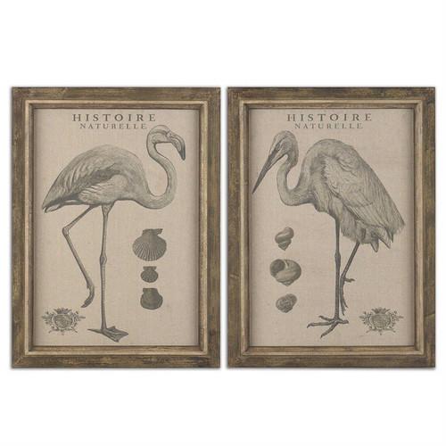 Natural History Set/2 - Framed Artwork