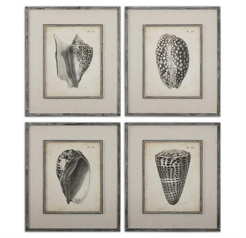 Vintage Diderot Shells Set/4 - Framed Artwork