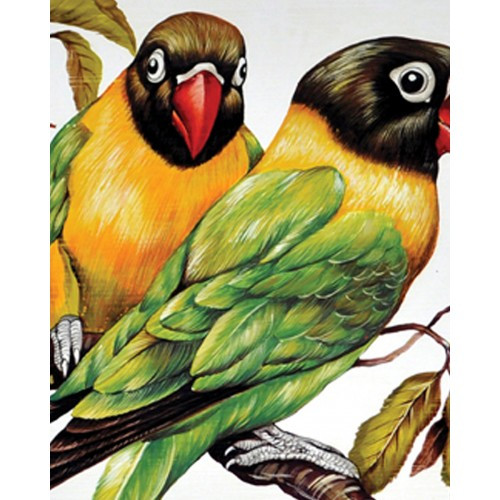 A242 Parakeets