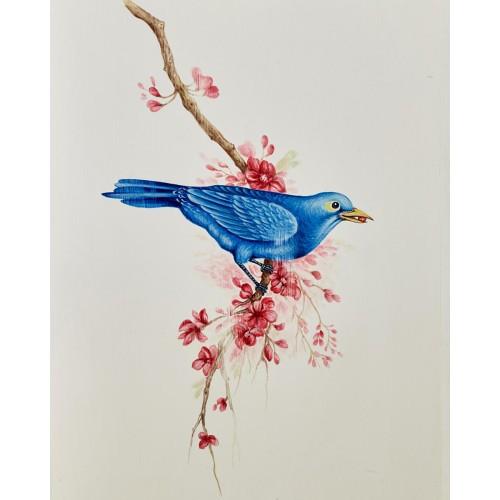 A710 Bluebird