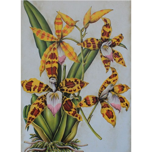 C379 Spider Orchid Plant Canvas