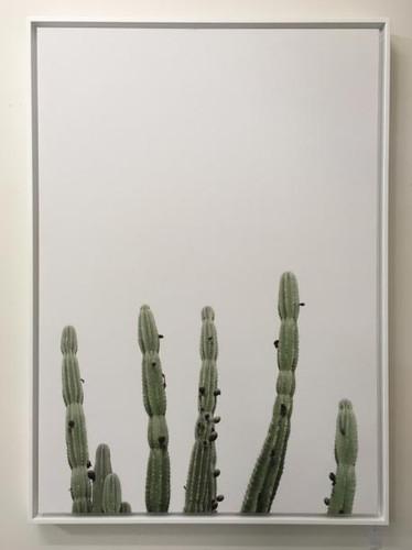 Framed Print: Minimal Cactus