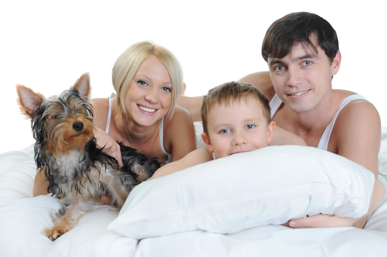Three Dog Night – or, Should You Let Your Dog Share Your Bed?