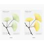 Color of Ginkgo leaf transparent sticky memo notes Large