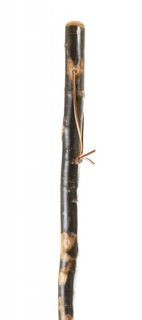 Free Form Aspen Walking Stick Image Thumbnail
