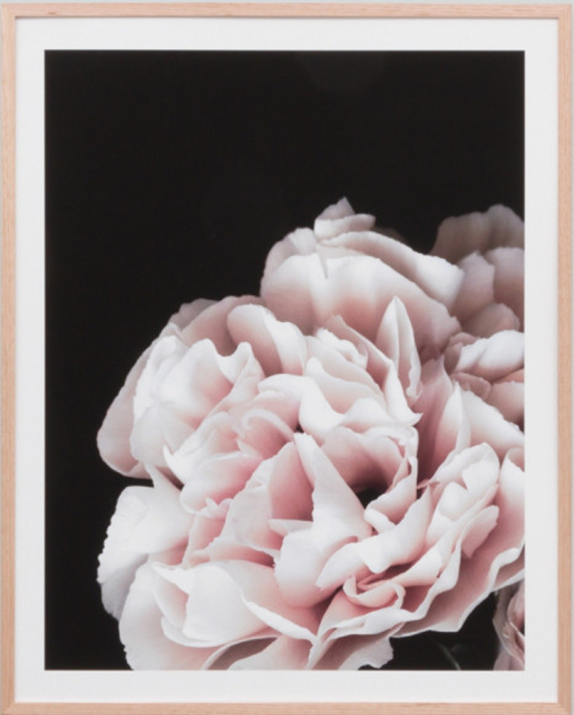 Rose Noir 3