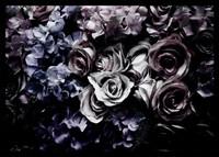 Wild Roses Serenade