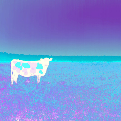 Jan Neil | I Love Cows (Aqua Violet)