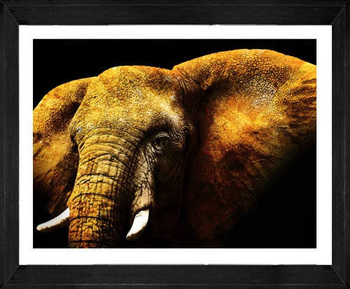 On Trend Image | Mikumi Elephant | Print Decor, Melbourne
