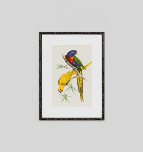 Lemaire Parrots 4