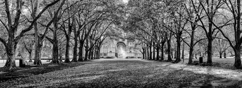 Photography | Carlton Gardens II | Nick Psomiadis