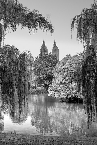 Photography | Central Park In Monochrome | Nick Psomiadis