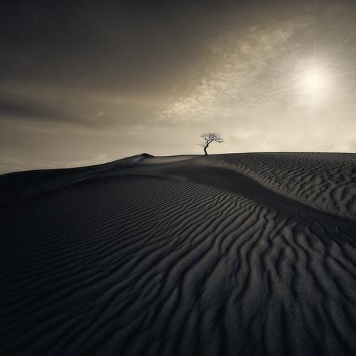 Photography  | Desert Waves | Nick Psomiadis