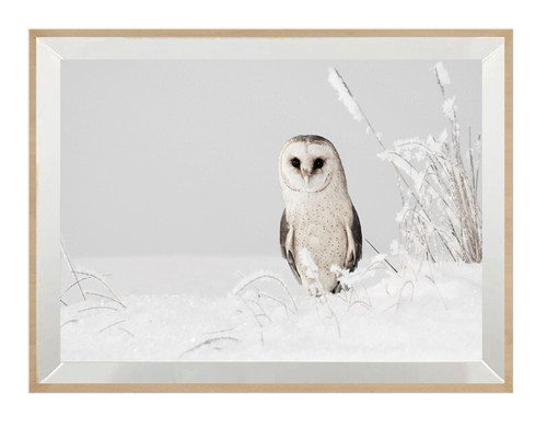 Peaky Owl