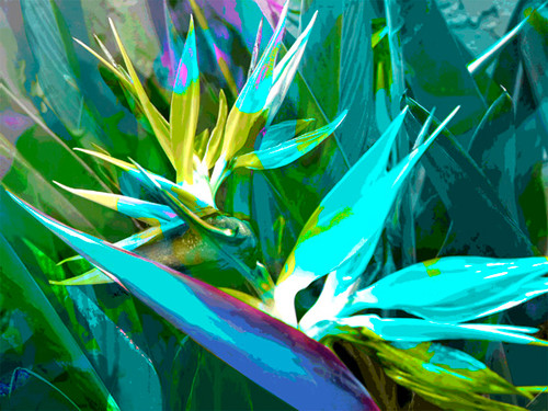 Jan Neil, Bird of Paradise Aqua