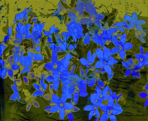 Bright colours of Australian flora, Flower Girl Blue by Jan Neil, modern art, Print Decor Melbourne