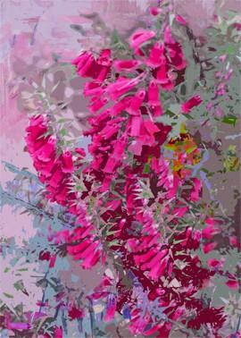 Bright colours of Australian flora, Heath 4 by Jan Neil, modern art, Print Decor Melbourne