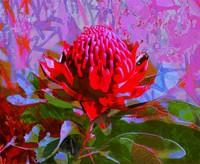Bright colours of Australian flora, Jan Neil modern art Print Decor Melbourne