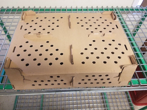 Chick Shipping Boxes 100 Count Box - Bundle of 25