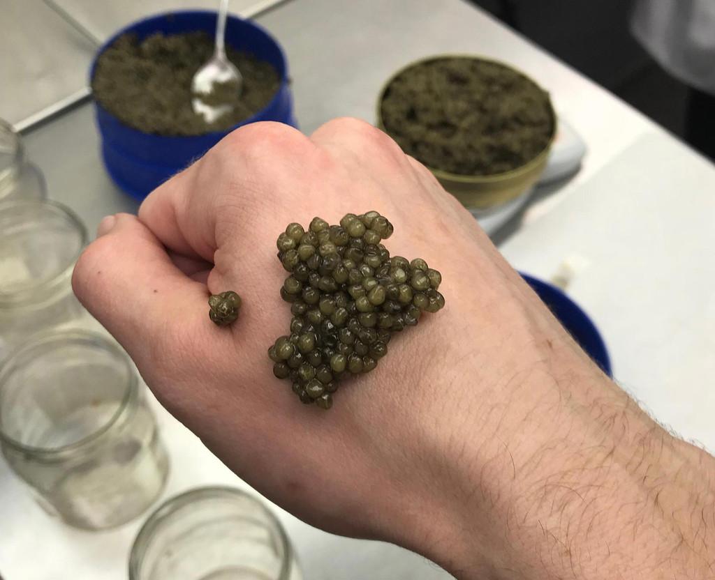 How to serve and eat caviar like a pro