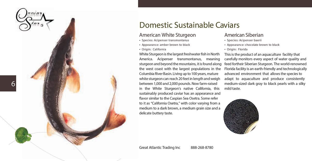 caviar-star-catalog-7.png