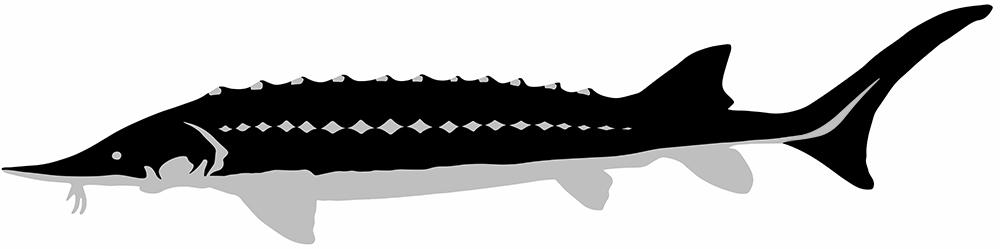 caviarstar-sevruga-pic-black-1-med2.jpg